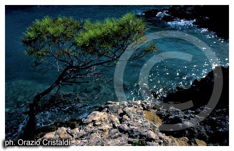isole tremiti - TREMITI - inserita il 11-Jul-07