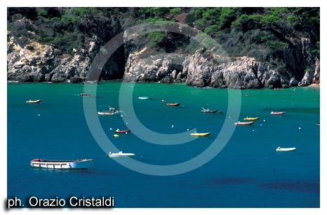 isola di san domino - Tremiti (2451 clic)