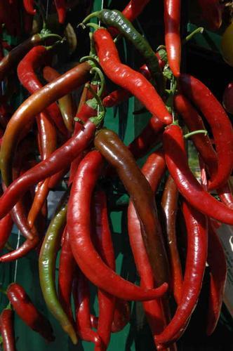 peperocini rossi - Scicli (2507 clic)