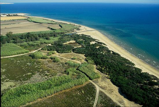 la macchia foresta del fiume Irminio, vista dall'alto - Playa grande (4917 clic)