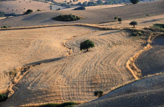 contrada san giacomo, paesaggio agrario - Ragusa (5349 clic)