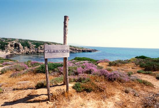 calamosche, la spiaggia - Noto (6137 clic)