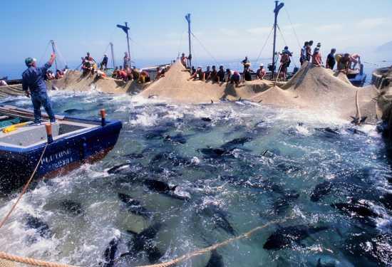 mattanza della tonnara san cusumano-bonagia, trapani - TRAPANI - inserita il 15-Nov-09