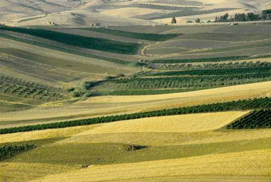menfi, paesaggio rurale (5813 clic)