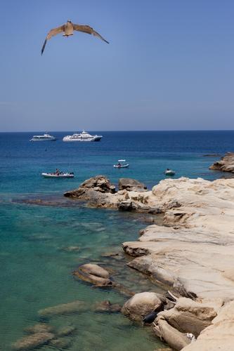 isole Tremiti, Cretaccio (2006 clic)