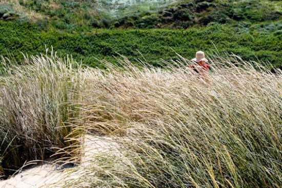 dune mosse - Vasto (2586 clic)