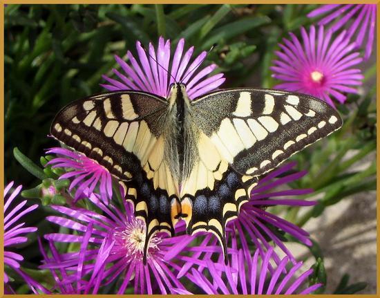 Farfalla........ - Sabbioneta (1978 clic)