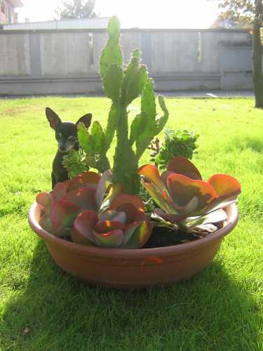 La principessa nel giardino di casa - Sabbioneta (3008 clic)