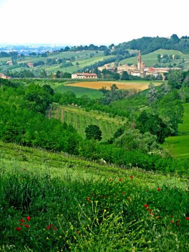 Castelvetro di Modena  (2823 clic)