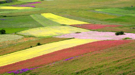 Spennellata di colore - Castelluccio (3790 clic)