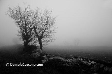 Campagna ricoperta dalla nebbia - Ragusa (4427 clic)
