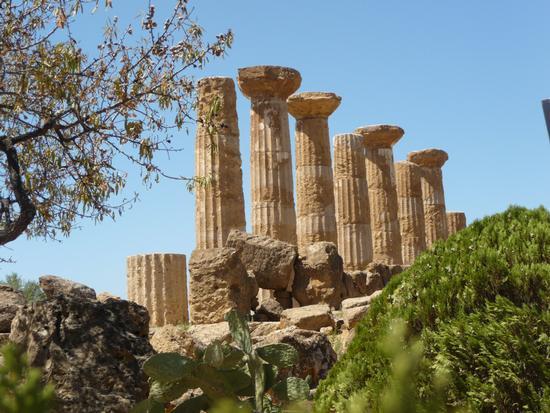 Valle de templi Tempio di Ercole - Agrigento (3379 clic)