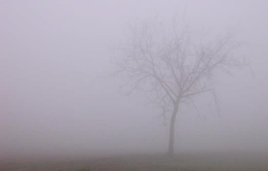 Nebbia - Mira (2573 clic)