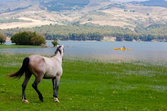 Cavallo e canoa - Agira (3525 clic)