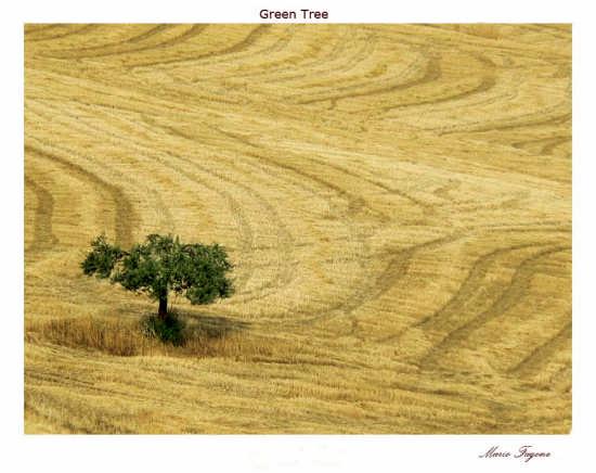 Green Tree - Agira (3370 clic)