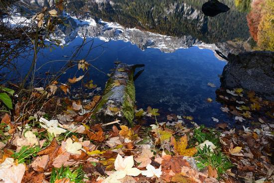 Riflessi sul lago di Tovel - Tuenno (455 clic)