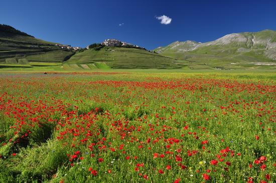 Piani di Castelluccio, parco dei Monti Sibillini   CASTELLUCCIO   Fotografia di Stefano Mazzucchelli