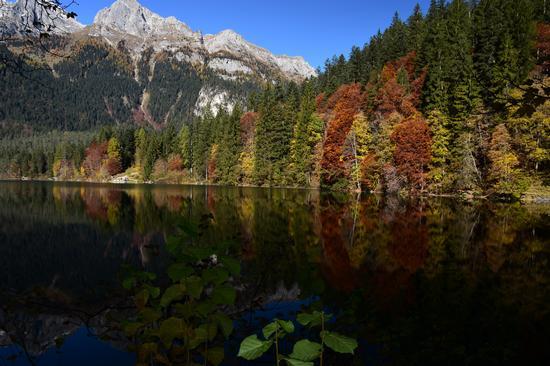 Autunno sul lago di Tovel - Tuenno (677 clic)