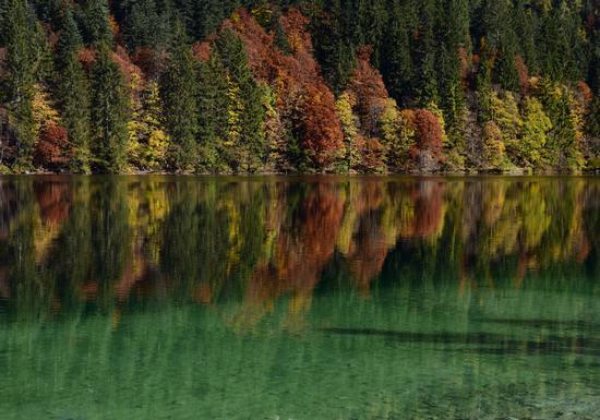 Foliage su Lago di Tovel - Tuenno (634 clic)