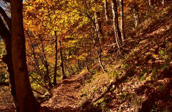 Foliage sul sentiero. - Tuenno (488 clic)