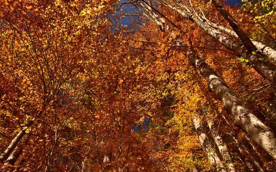 Foliage a Tovel - Tuenno (478 clic)
