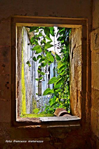 Dietro la finestra (1332 clic)