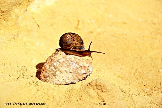 Cercasi gemello: lumaca sperduta nel deserto (836 clic)
