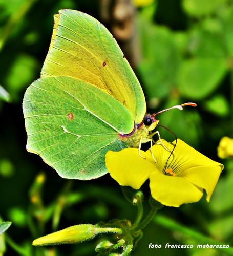 Colori e natura: gemellaggio - Rosolini (2510 clic)