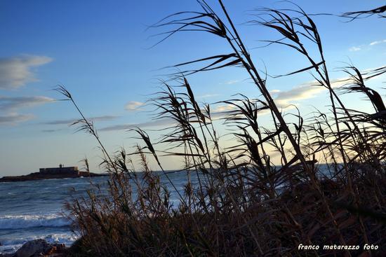 Canne al vento all'Isola delle Correnti (2974 clic)