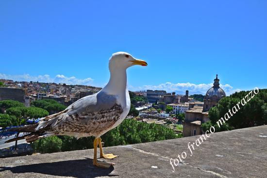 uccel di colosseo - Roma (1578 clic)