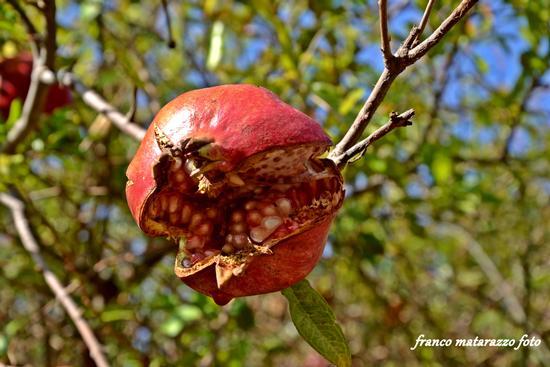 SAPORI DI SICILIA: a bocca aperta, mangiami! - Rosolini (2693 clic)