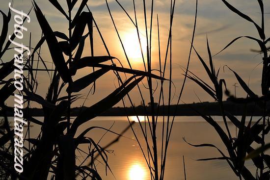 Ladro di tramonti dietro le canne - Ispica (2163 clic)