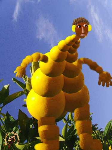 L'uomo venuto dalle arance - Rosolini (3060 clic)