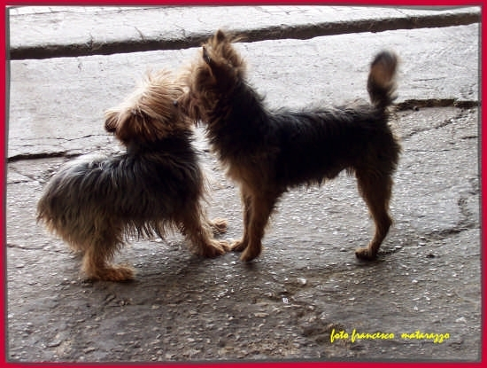 L'ORA DELL'AMORE!....cane  - Rosolini (2714 clic)