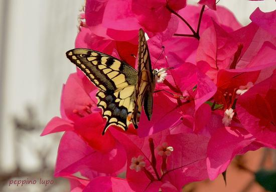 Nel mio giardino - Trinitapoli (663 clic)