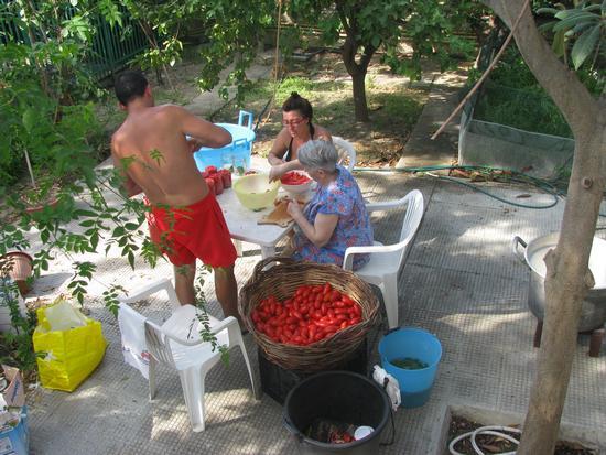 Campagna salsa 2012 - Trinitapoli (1384 clic)