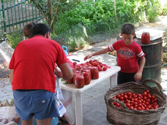 Conserva di pomodori - Trinitapoli (1339 clic)
