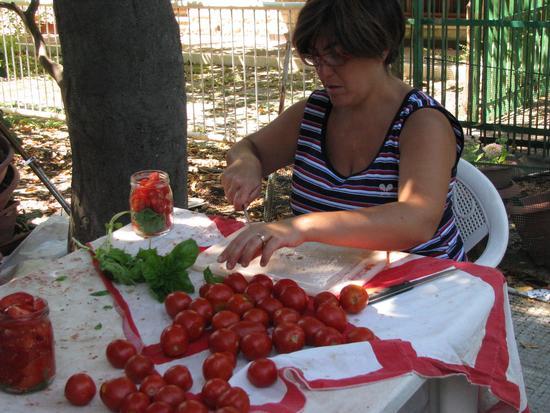 Conserva di pomodori - Trinitapoli (1550 clic)