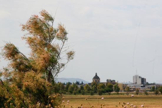 Trinitapoli:zona umida (1187 clic)