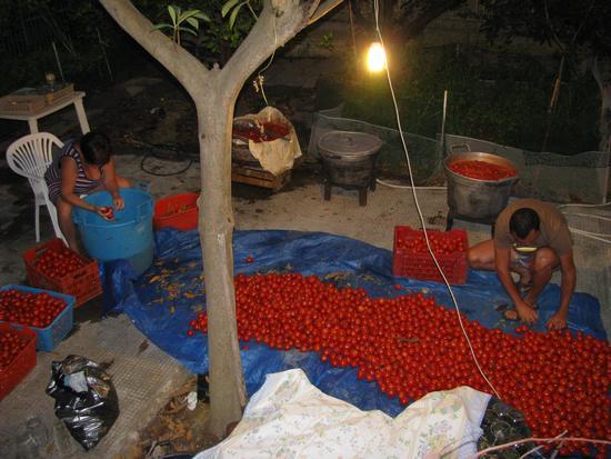Conserva di pomodori - Trinitapoli (1491 clic)