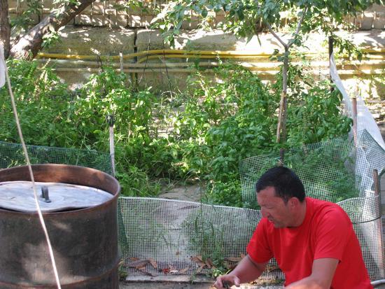 Conserva di pomodori - Trinitapoli (1096 clic)