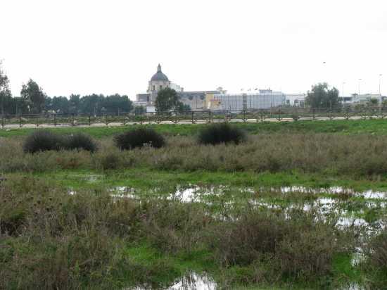 Trinitapoli: Zona Umida (1197 clic)