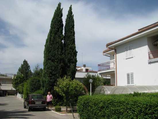 Il mio giardino - Trinitapoli (1238 clic)