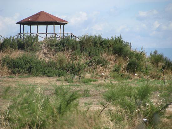 Trinitapoli: Zona Umida. Parco (2114 clic)