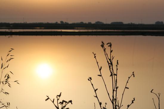 Trinitapoli zona umida                                            Volo di fenicotteri (2421 clic)
