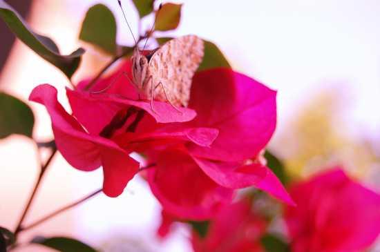 farfalla - Ostia (1698 clic)