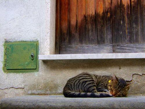 La siesta - Corniglia (3199 clic)