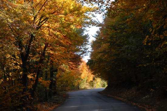 i colori dell'autunno - Cingoli (2599 clic)