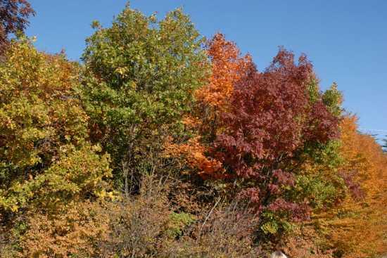 i colori dell'autunno - Cingoli (2801 clic)