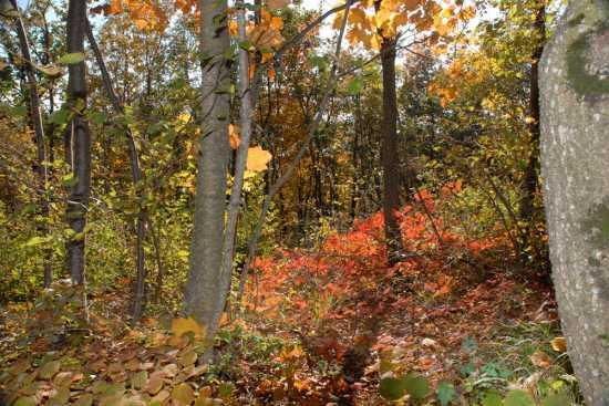 i colori dell'autunno - Cingoli (2183 clic)